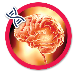bonus-5-pote%cc%82ncia-cerebral