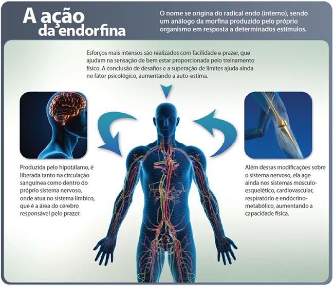Endorfina - Produzida pela glândula hipófise, coposta de 31 aminoácidos. Ajuda no combate ao estresse, pois tem ação analgésica e relaxante, quando liberada estimula a sensação de bem-estar, conforto, melhora o estado do humor e alegria.