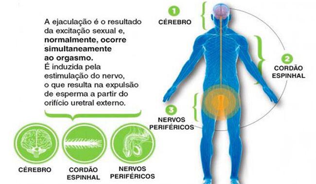 Ejaculação o que é ? e o que causa a ejaculação precoce?